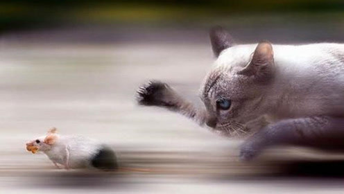 猫为什么总是和老鼠过不去?主要有这两大原因,今天终于明白了!