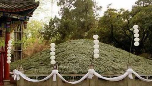 距今1700多年的诸葛亮墓,为何没人敢盗?墓旁的大树过于邪门