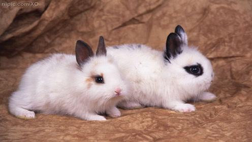养兔子的伤心点:每天晚上都会准时发神经,大半夜就是不让人睡觉