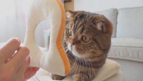 想把面包套到猫脖子上,甚至拿出猫粮来吸引,她能成功么?