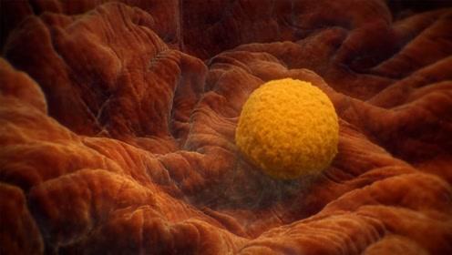 受精卵是如何着床的?3D动画模拟演示,原来这就是生命的开始