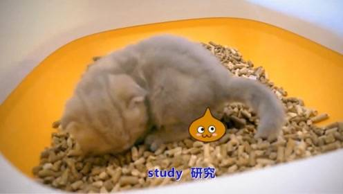 猫其实并没有九条命我们一定要爱护小动物科普知识快乐英语