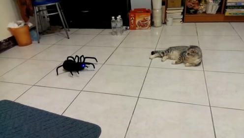 自从主人网购了这只玩具蜘蛛后,家里的主子再也不能呼风唤雨了