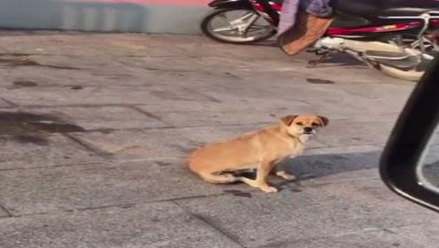 狗子:早点叫哥,哥不就给你腾地方了吗,多大点事吗?
