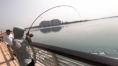 渔夫用活鱼做饵钓海狼,海狼上钩的瞬间,全场沸腾了
