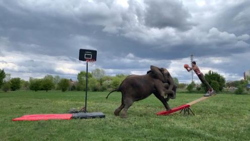 """男子和大象玩""""跷跷板"""",一秒弹射上天,画面太刺激了"""