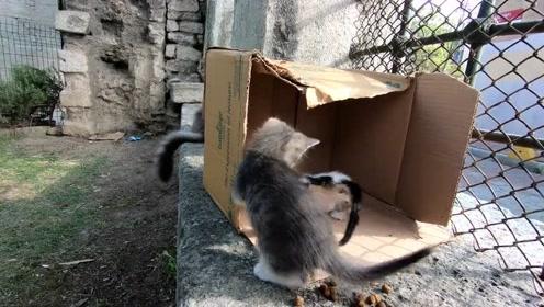 可爱的小猫试图抓住自己的尾巴