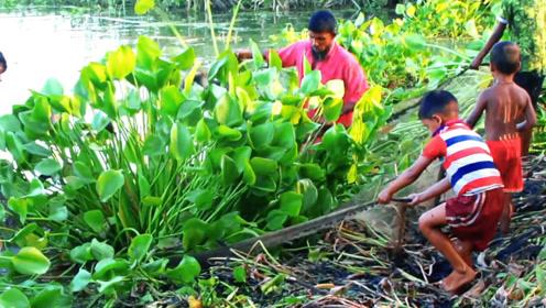 一棵大水草,一网兜住,几个人一起拽上岸,捕鱼连草都捕了!