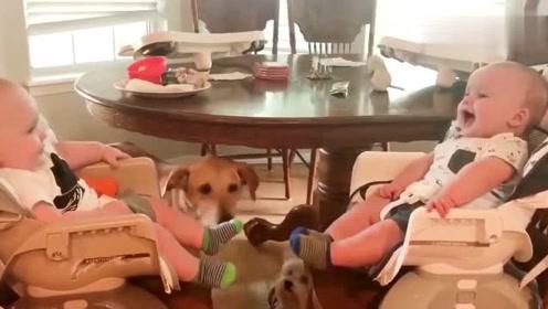 两个宝宝一起玩耍一起闹,太逗了