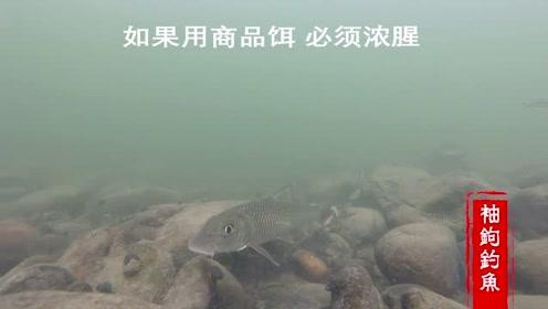 如果你的目标鱼是野鲮鱼,那么鲮鱼的生活习性你必须了解