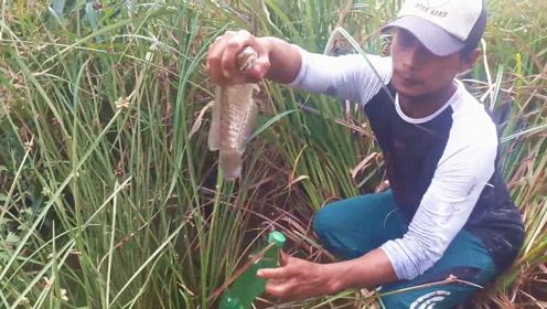 饮料瓶下面挂着大鱼,村民扒开杂草,转眼就将它抓住了,真爽!