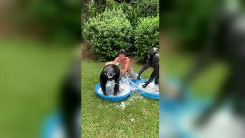 跟大猩猩一起洗澡