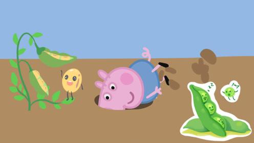 消失的豆子去哪了?猪妈妈变身大侦探,带着小猪佩奇送豆子回家!