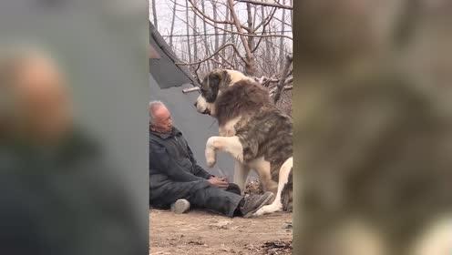 这才是真正的忠犬!老人没盖被子!汪星人竟然这样做