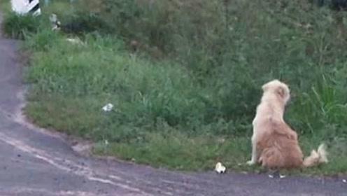泪目!泰国一小狗与主人走散 坐路边苦等四年