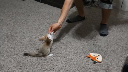 """女子探险捡到一只""""小奶猫"""",精心饲养一个月后,怎么不对劲了?"""