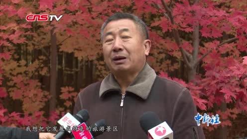 辽宁抚顺500亩苗圃退耕还林3万株红枫引游客观赏