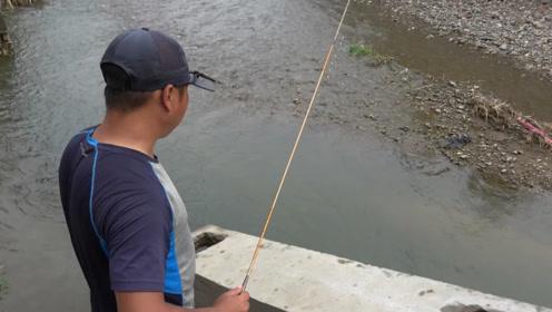 钓鱼:清澈见底的小河,看着没鱼,但却下竿就有口啊!