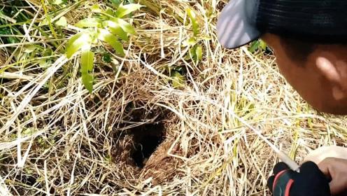 烂草下的深洞竟然可以钓鱼,这钓点有点不可思议了……