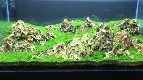 鱼缸里面养草坪,没有二氧化碳怎么办?这种水草让你轻松搞定