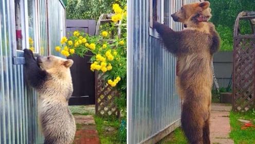 世界上最奇特的5个家庭,把灰熊当亲人一样