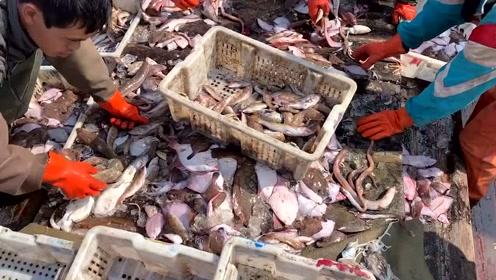 大胖家的渔船出海捕捞2天,海鲜装了上百筐,值钱货成堆