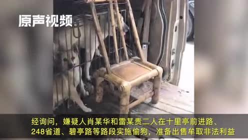 沿路偷狗面包车内铁笼囚10只狗!旁边有套狗工具,两人被拘罚款