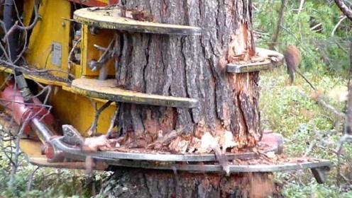 极其快速的砍树机,这种机器你见过吗?