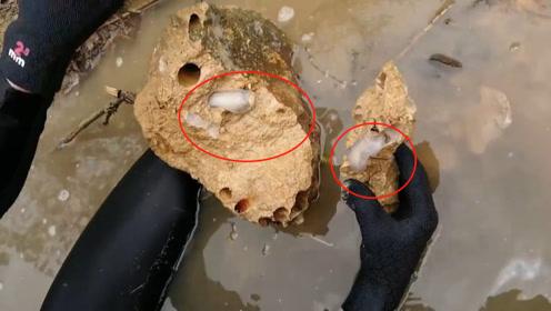 菲律宾雨林中发现新物种,吃石头为生,石块被咬成蜂窝煤