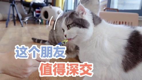 小姐姐想撸12只网红猫遭嫌弃,无奈拿出零食 ,喵:这朋友可以交
