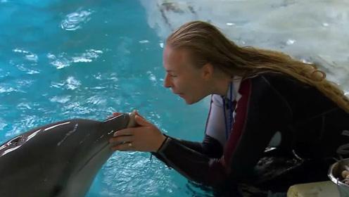 海豚喜欢蹭孕妇肚子,到底有什么目的?真相太牛了