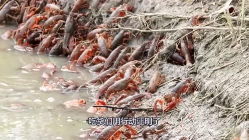 """印度""""拖鞋虾""""泛滥,请求中国吃货支援,却惨遭强烈拒绝!"""