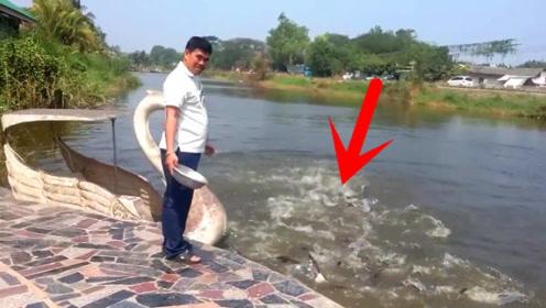 平静的河面丢下几块肉,下一秒水面翻江倒海!水下有食人鱼?