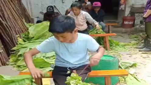 穷人的孩子早当家,农村打暑期工的孩子,干活非常卖力!