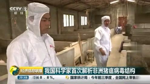 中国科学家解析非洲猪瘟病毒:是一种相当巨大、复杂的病原体!