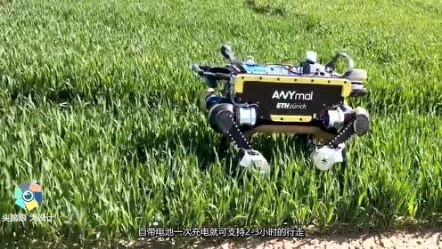 """中国大学生,造出""""国产4足机器人""""网友:专家都不一定造的不出"""