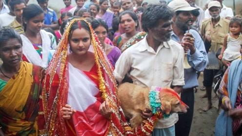女孩的结婚对象是一只狗,不是自愿也不能反抗,看完令人心酸!