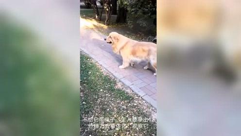 这才是养狗人士,因为别人害怕狗狗,根本就不去电梯