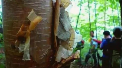 世界上比钢铁还坚硬的树,用斧头劈砍会产生火星,网友:要怎么砍断!