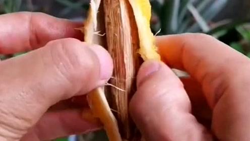 """在家种植""""芒果""""时,先用小刀切掉果肉取出种子,网友:果断试试!"""