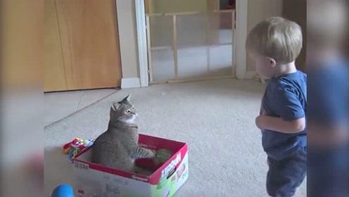 喵星人:熊孩子,你动我一下试试?我的脾气可不好哟!
