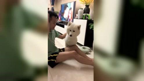 狗子:我也给你表演个魔术,你看棒不棒