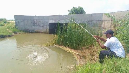 野渠出水口随手抛一竿,没料到中鱼速度这么快,钓友正在慌忙收杆了