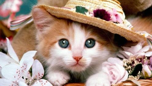 为什么猫离家出走就不会回来了?而狗会回家?