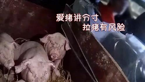 小猪坐私家车吹小空调上高速 交警笑了:你这是心疼猪子?