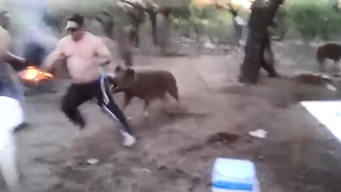 男子偷袭小猪崽,不料被一旁的猪妈妈发现,下一秒忍住别笑