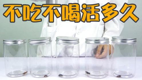 """实验:蟑螂为什么被称为""""小强""""?不吃不喝居然能活那么久!"""