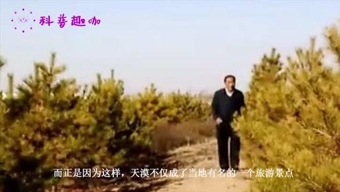 中国治理最成功的沙漠,不仅环境成功变绿,当地人还靠它月入过万