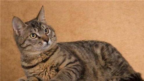 世界最受欢迎宠物猫品种,每个都有各自的特点,让人很难选择