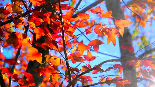 """广东的""""香格里拉"""",山高景美四季分明,秋天赏枫正是时候!"""